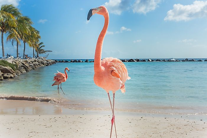 Flamingoes on the beach in Aruba.