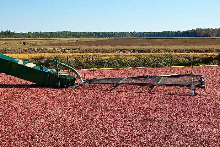 Cranberry harvest in Chatsworth, New Jersey, the third largest producer of cranberries in the United States. Editorial credit: Jana Shea / Shutterstock.com.
