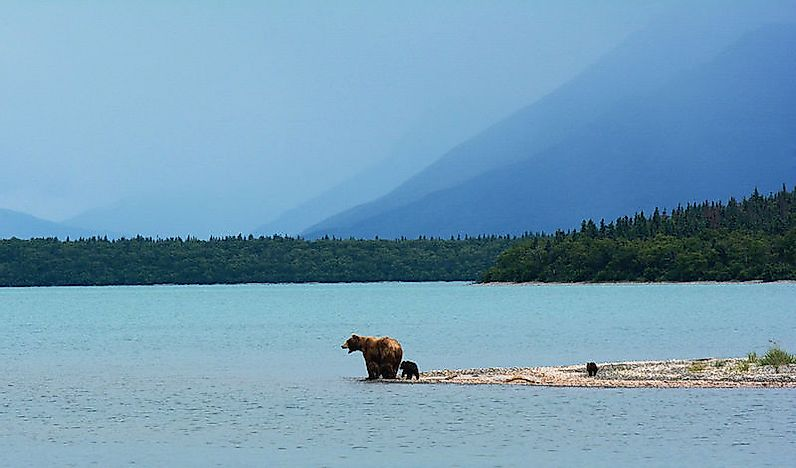 What Animals Live In Alaska?