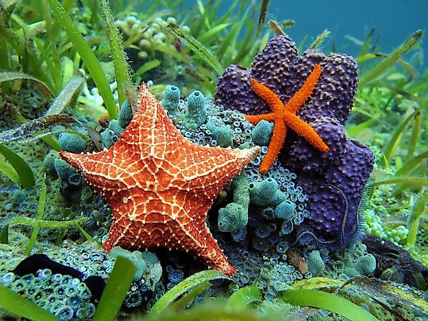 What are Echinoderms?