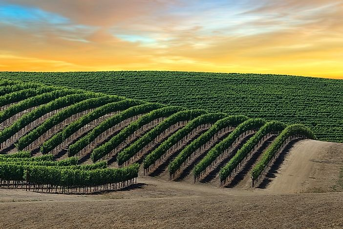 Where Is Napa Valley, And Why Does It Produce Such Good Wine?