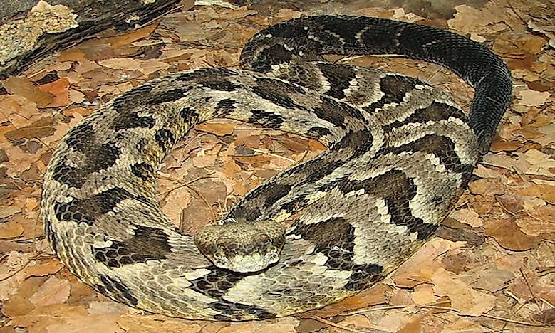 A List Of Venomous And NonVenomous Snakes Of Alabama WorldAtlascom - Map of poisonous snakes in us