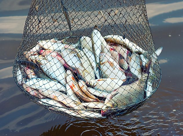 how does recreational fishing affect the environment