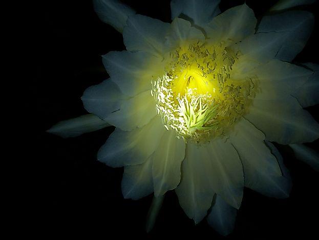 Самые Редкие цветы в мире. Видеть их удавалось не многим.
