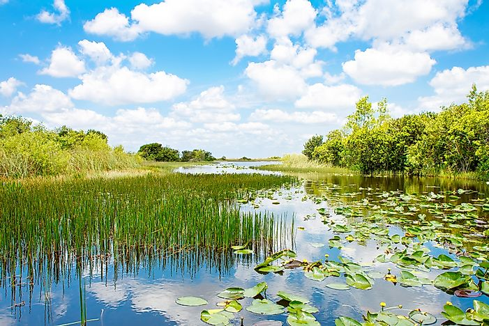 What Are The Major Threats To Wetland Ecosystems Around The World?