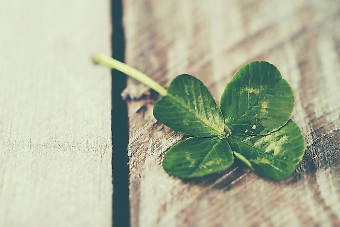 #5 Four Leaf Clover, Ireland