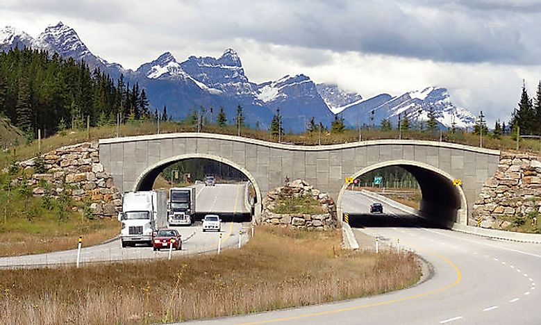 What is a Wildlife Crossing and Why Is It Important?
