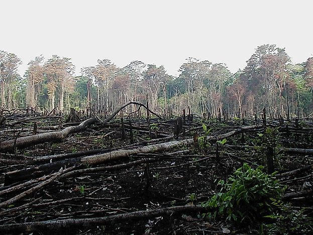 Deforestation Triggered By Charcoal Production Around The World