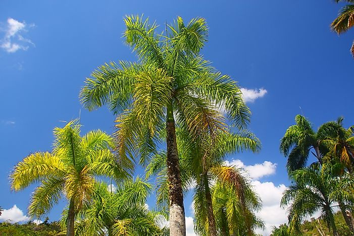 Hd Image Pictures Of Palm Trees In Florida