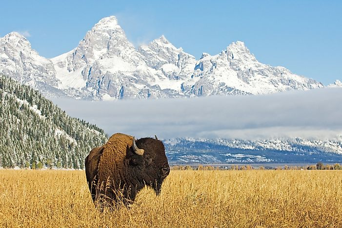 When Is National Bison Day?