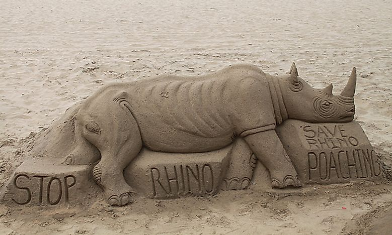 Types Of Rhinos Living Around The World Today