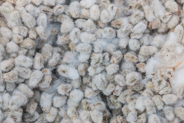 Countries Who Produce the Most Cottonseed