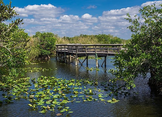A boardwalk in Everglades National Park, Florida.