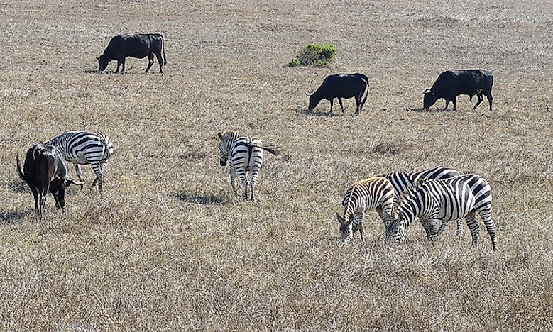 #2 Zebras Need To Be Protected -