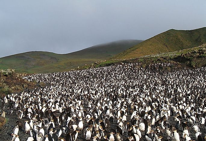 Macquarie Island, A UNESCO World Heritage Site In Australia