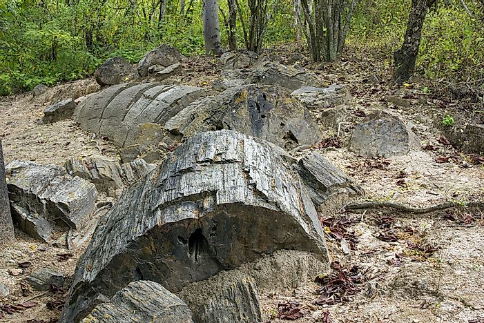 What Is Petrified Wood?