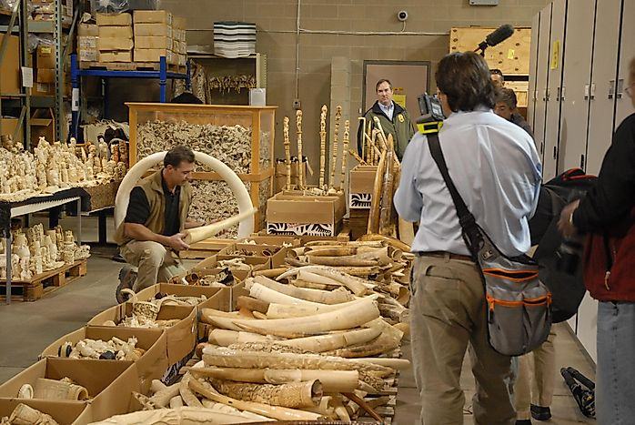 Asian Countries With The Most Ivory Seizures