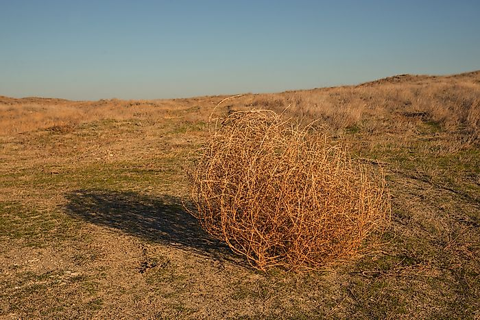 How Are Tumbleweeds Formed?