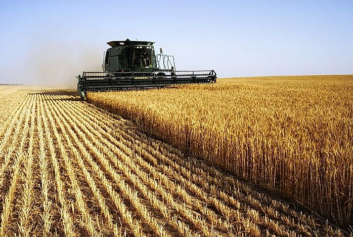 Top Wheat Producing Countries In The World