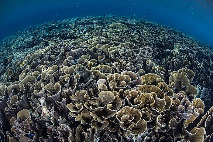 Threats to the Coral Triangle Ecosystem