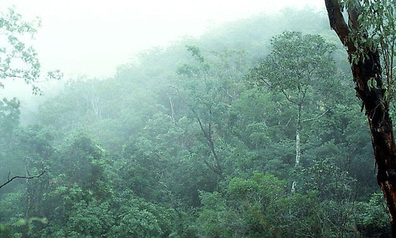 Tropical Rainforest Animals Worldatlas Com