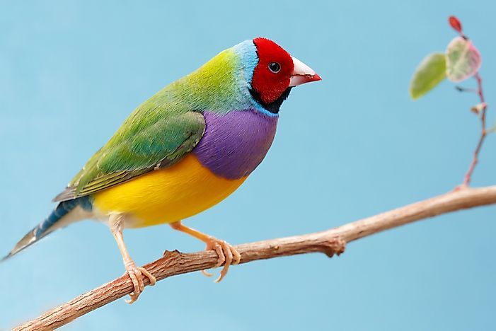 The Most Colorful Birds From Around The World - WorldAtlas com