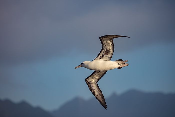 #3 Seabirds Of Hawaii