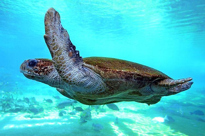 What Animals Live in the Atlantic Ocean? - WorldAtlas com