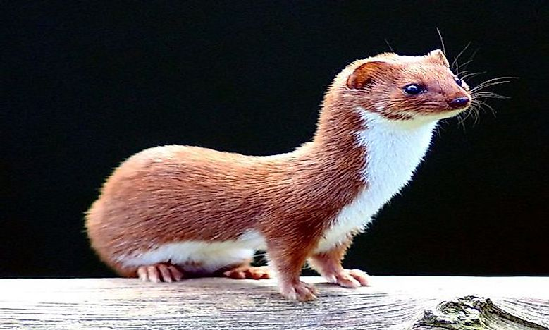 What Animals Live In The Taiga? - WorldAtlas com