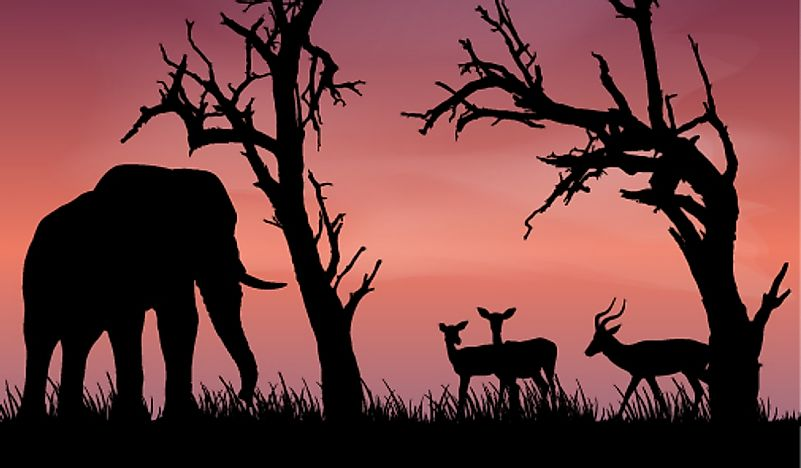 What is Trophy Hunting?