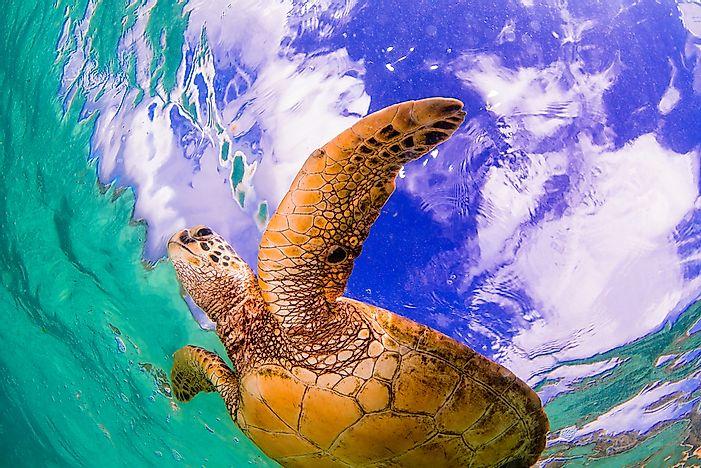 What Animals Live in the Pacific Ocean? - WorldAtlas.com Pacific Ocean Underwater Animals