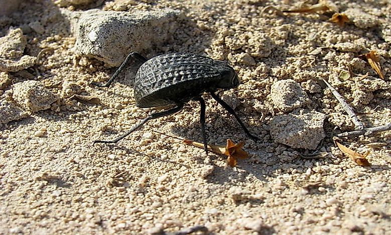 #6 Invertebrates Of The Arabian Desert -