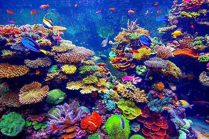 Oldest Aquariums in the United States