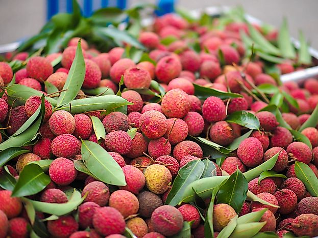 Top Lychee Producing Countries in the World