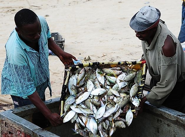 Native Fish Species Of Kenya Worldatlas Com