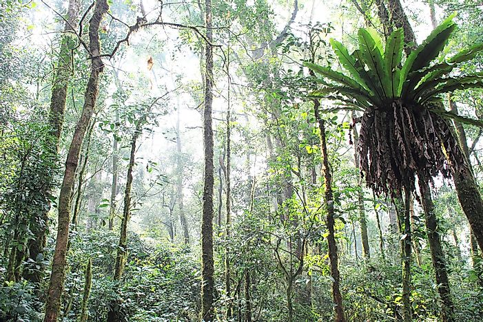 The tropical rainforest of Sumatra, Indonesia.