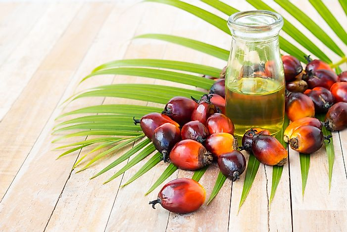 Top Palm Oil Producing Countries In The World