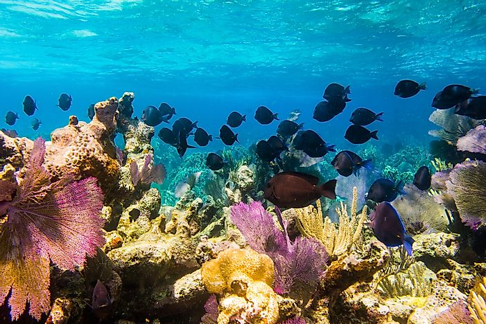 #4 Mesoamerican Barrier Reef