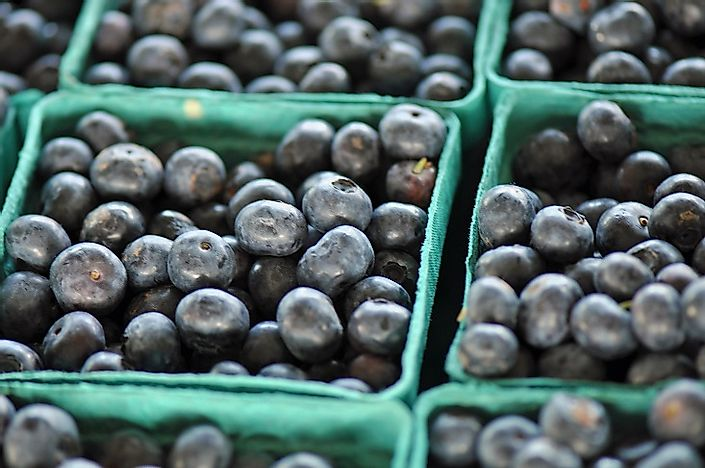 7 North Carolina 48 5 Million Pounds Of Blueberries Produced