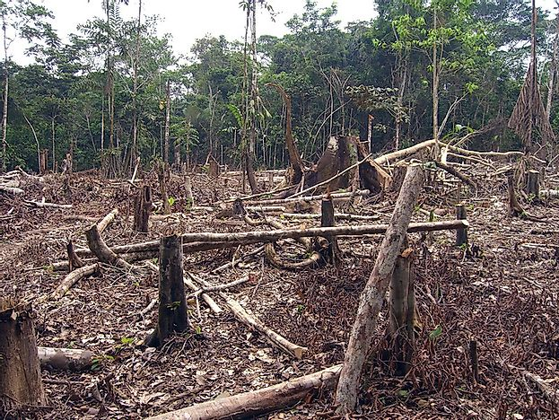 Worst Countries For Deforestation By Woodland Area Losses