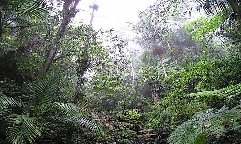 #4 Climate And Landscape Of The El Yunque Rainforest -
