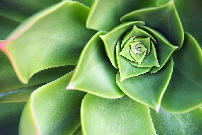 #3 Succulent Leaves