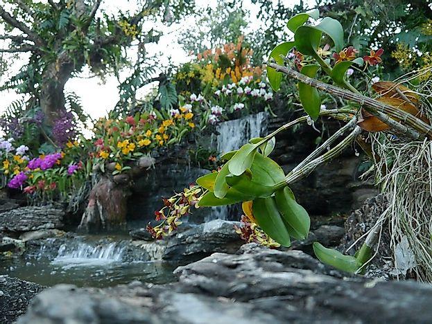 Singapore Botanic Gardens - WorldAtlas.com