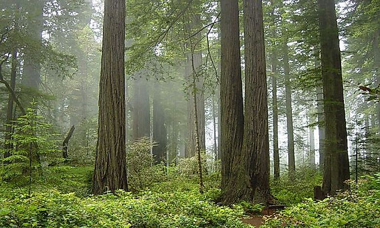#8 Redwood National and State parks -