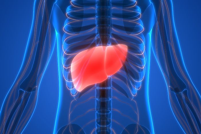 Acute Liver Failure Facts: Diseases of the World