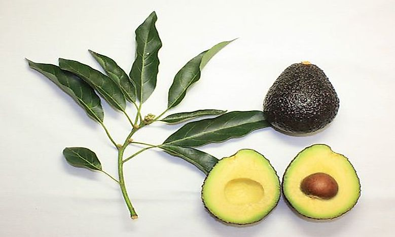 The Biggest Avocado Producing Countries In The World