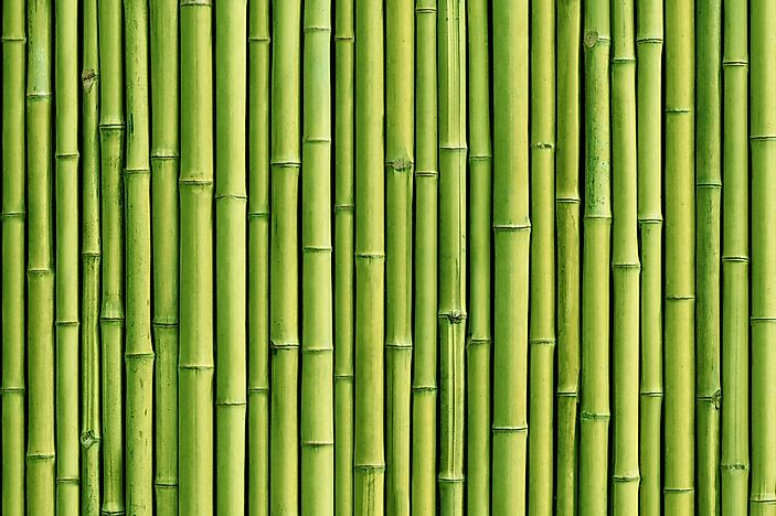 What Are The Different Applications Of Bamboo?