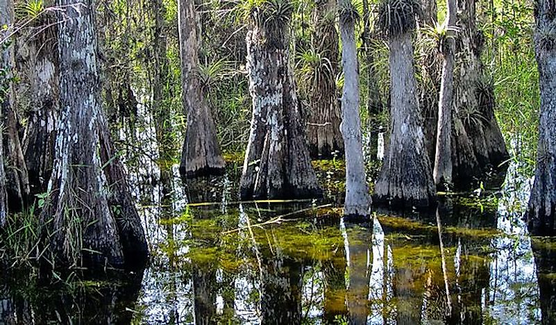 #1 Big Cypress National Preserve