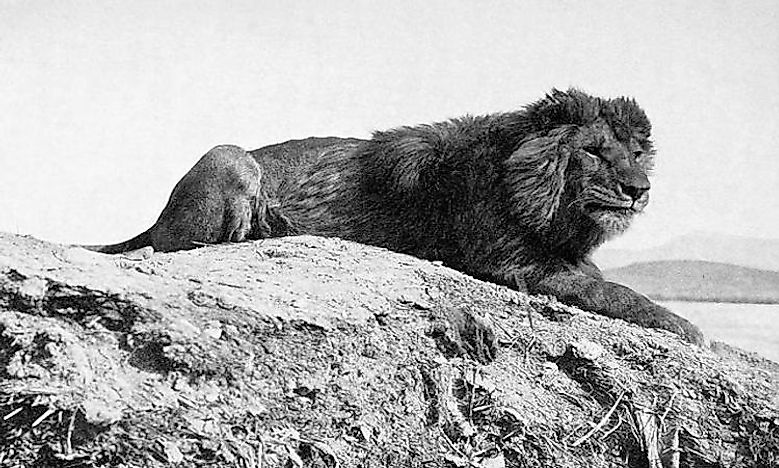 Animals That Went Extinct in the 20th Century
