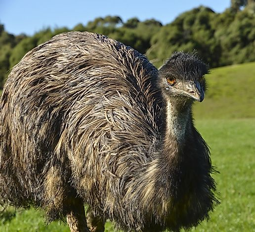 Flightless Birds From Around The World